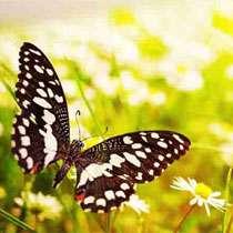 Фотопечать - Бабочки