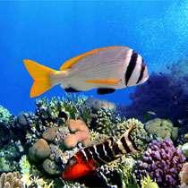 Фотопечать - Морская фауна