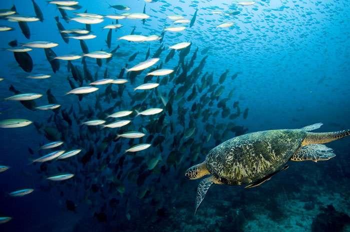 Морская фауна